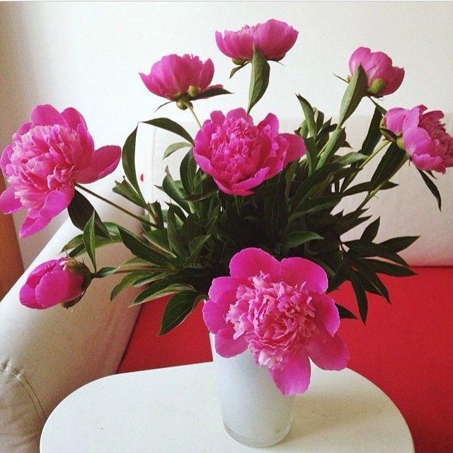 А вы точно решили что не будите радовать в этом месяце пионами родных, друзей и близких? ;) #dushanbe #tjk #makemehappytj #flowersdelivery #доставкацветов #душанбе #таджикистан #пионы