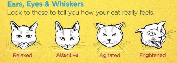 حركات القطط ومعناها لغة الجسد عند القطط دليل العيادات البيطرية دكتور بيطري بين يديك Cats Feelings Told You So