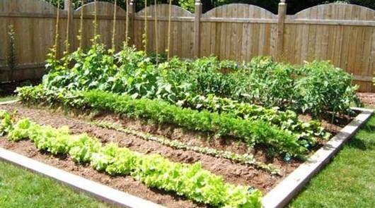4º Paso para crear un huerto en casa. Ahora que ya tenemos nuestro huerto en marcha solo nos queda regar y cuidarlo para que crezca sano y fuerte.