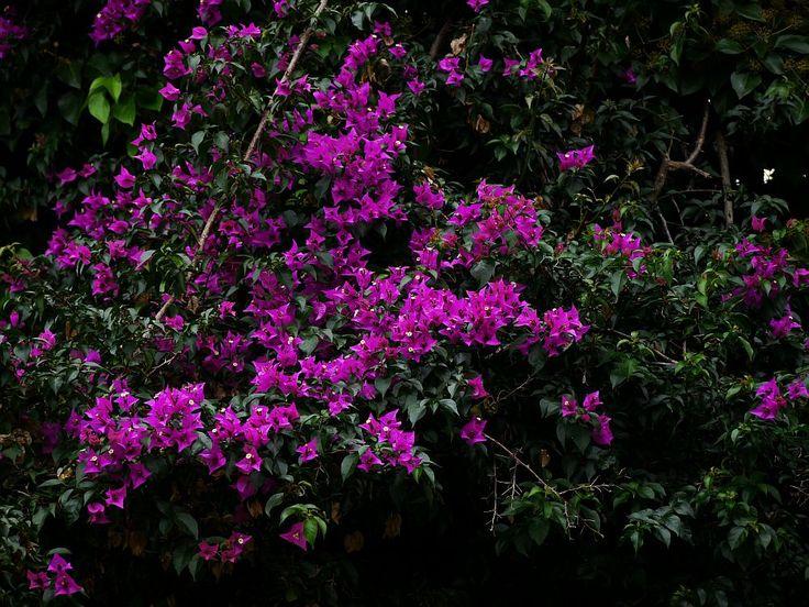 172 besten Mediterrane Pflanzen Bilder auf Pinterest Mediterrane - tipps pflege pflanzen wintergarten