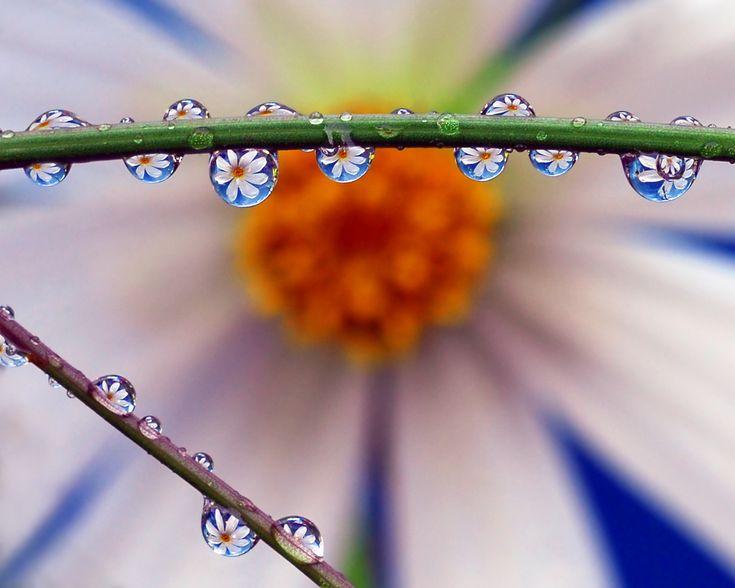 macro photo / drops