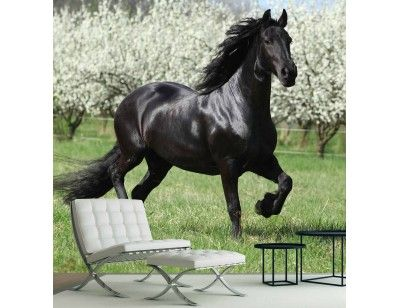 """Black Stallion"". A wall mural from Muralunique.com. https://www.muralunique.com/black-stallion-9-x-9-2-75m-x-2-75m.html"