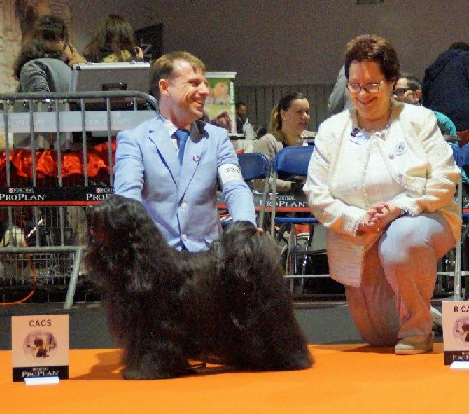 Accueil - Elevage Nomechan - eleveur de chiens Terrier tibétain champion breeders of both my Shubha and Sona more prizes in 2017