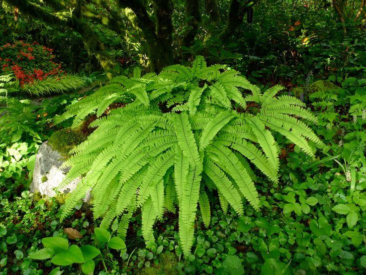 Japanese Garden Plants Backyards