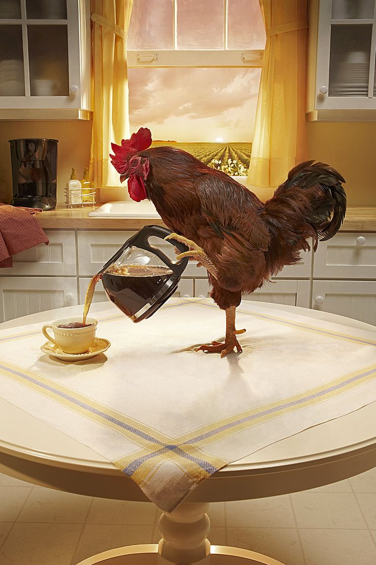 I think I found my New Pet!Life Quotes, Daily Reminder, Cups Of Coffe, Roosters, Mornings Coffee, Wake Up, Quotes Pictures, Quotes Life, Good Advice