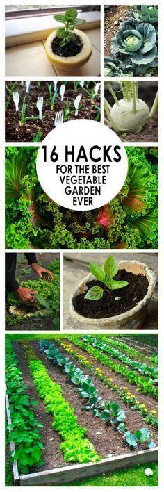 Best 20 flower garden layouts ideas on pinterest spring for Garden design hacks