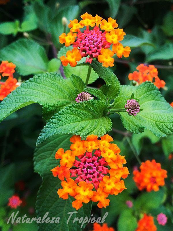 98 best Flores y Plantas images on Pinterest | Gardening, Growing ...