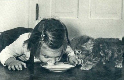 Try some new things like teaching a kitten how to drink milk from a saucer.