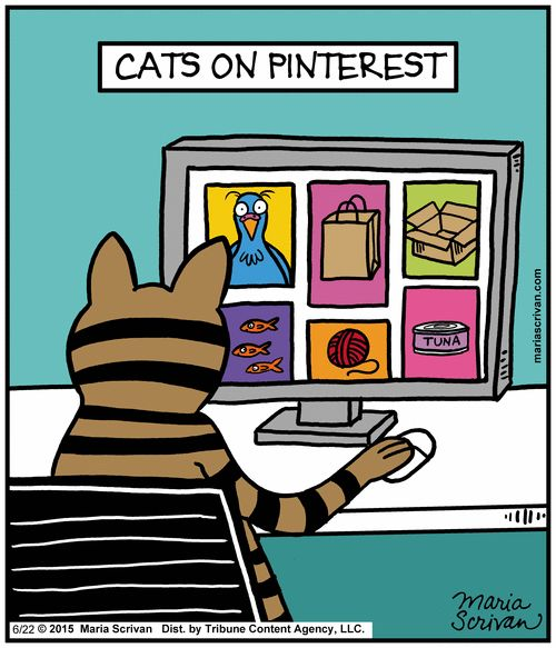 (Cats on Pinterest) * * THE TEAM MUST'VE MADE A SPECIAL WEBSITE FOR FELINES. LOL