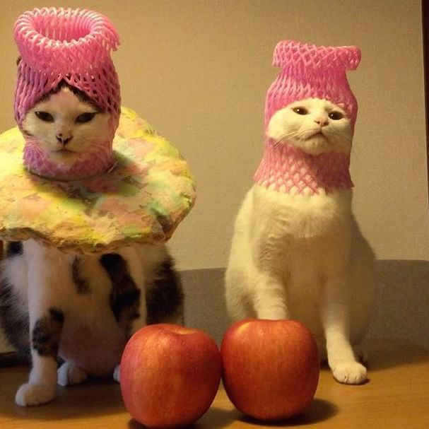 #八おこめズラ #八おこめ動く 2人はほとんど動かんけど2人の先っぽが、じわじわ伸びていく…w 最後の2人の動きw #八おこめ #ねこ部 #cat #ねこ