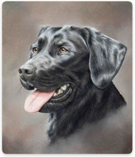 Quick Relaxation Techniques Black Dog