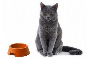 Thinking of changing your cat's diet? It may be a good idea.