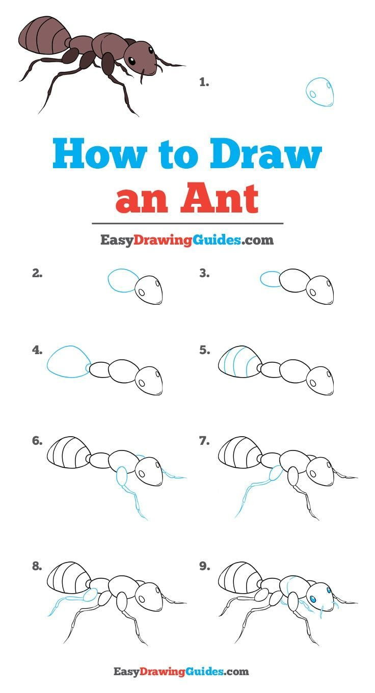 How to draw an ant really easy drawing tutoria painted rocks easy drawings drawings pencil drawings