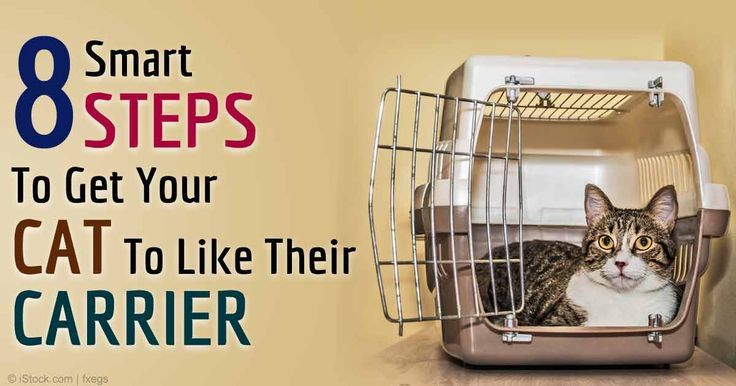 Help your cat get accustomed to her pet carrier at home with these 8 simple steps. http://healthypets.mercola.com/sites/healthypets/archive/2015/02/02/conquering-cat-carrier.aspx