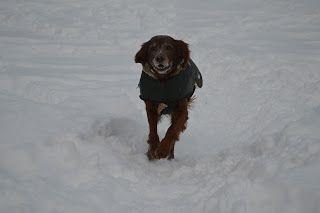 Gårdstunet Hundepensjonat: Frisk start på uken med skjønne hunder på tunet!
