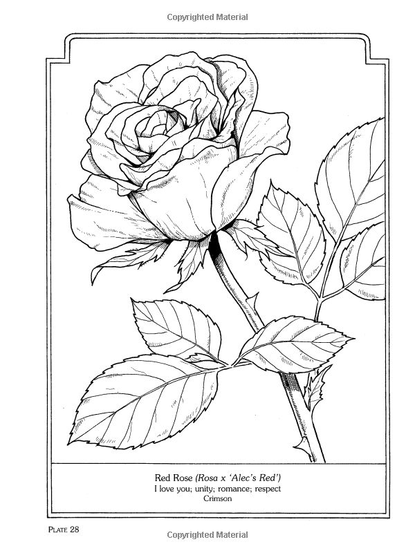 rose art coloring pages - photo#4