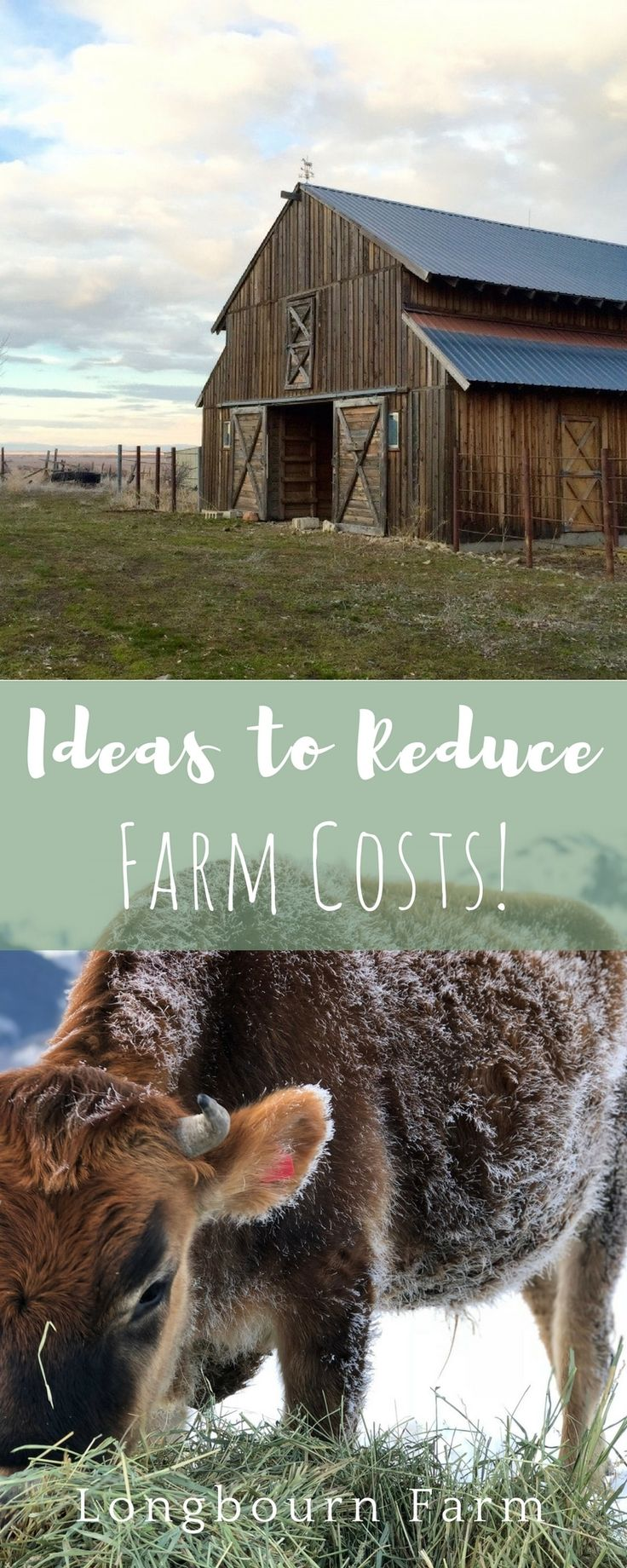 Check out this post for 8 ways you can reduce the cost of your farm. Typical ideas to out-of-the-box ways you can save a buck.  via @https://www.pinterest.com/longbournfarm/