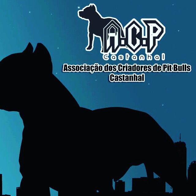 ACP... Assossiaçao de Criadores de PitBull's