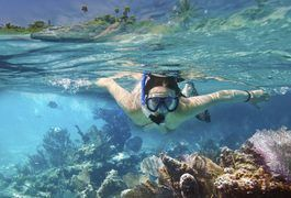 Viewing the beauty and wonder of the coral reef in the Florida Keys is an…