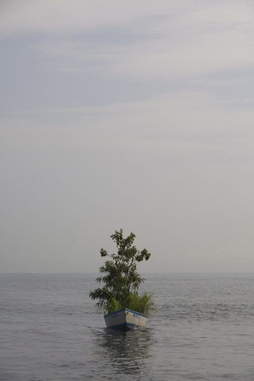 wonderful to do this off a private dockGreen Thumb, Immigration Trees, Myeongbeom Kim, Islands Wwwmyeongbeomkimcom, Puerto Rico, Islands Www Myeongbeomkim Com, Trees Boats, Art Attack, Trees Artists