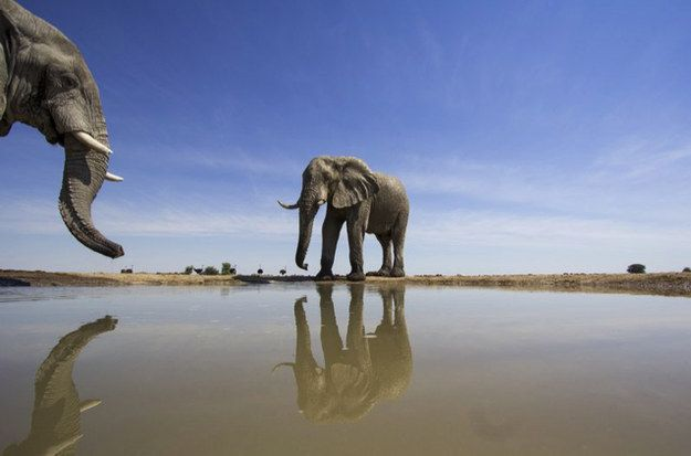 Elephants Can Recognize Themselves In A Mirror | Community Post: 13 Reasons Why Elephants Aren't So Different From People