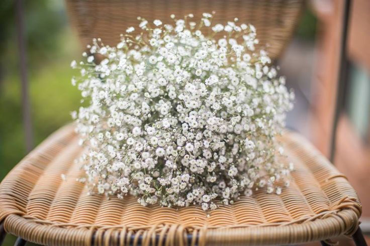 White Gypsolphia in a simple bouquet