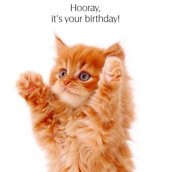 Birthday - poes