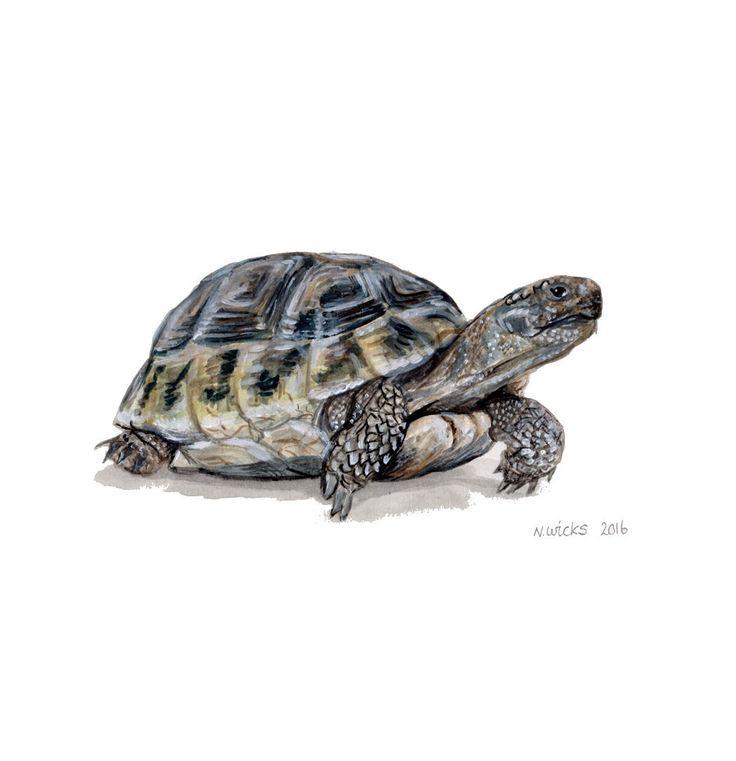Origineel schilderij van de schildpad van NaomiWicksArt op Etsy