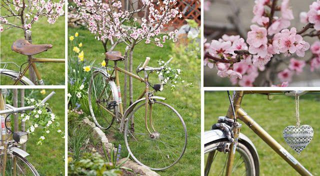 bicycle, garden, flower