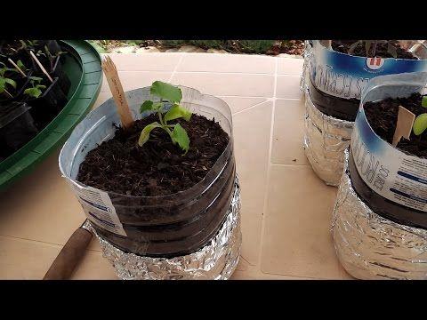 Semi courgette / tomate et toutes graine en bouteille 100% de réussite et sans entretien - YouTube