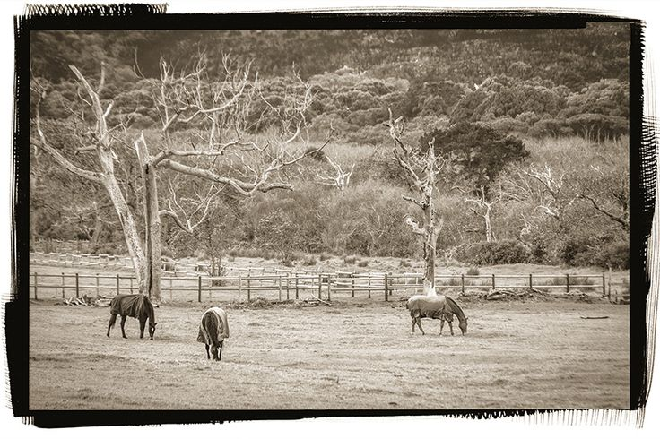 Horses out to pasture
