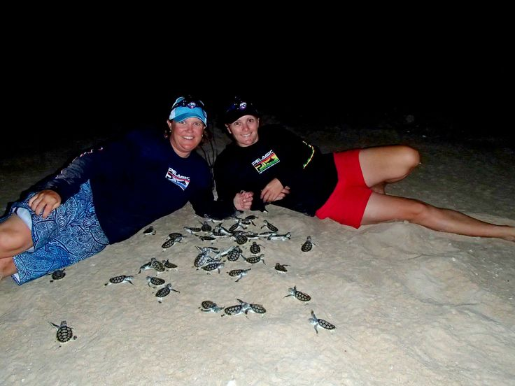 Checking out the biggest Flat Back Turtle hatchery in the world on Crab Island