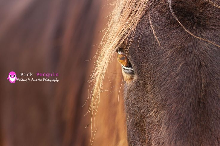 Photo of Sam my Standard bred horse