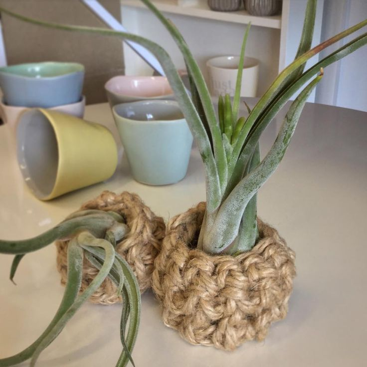 Crochet twine planters with Caput-Medusae #airplants #tillandsia #planters #airplantdesigns #crochet