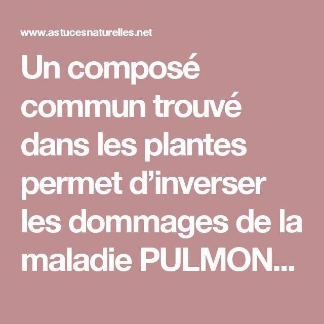 Un composé commun trouvé dans les plantes permet d'inverser les dommages de la maladie PULMONAIRE OBSTRUCTIVE CHRONIQUE!