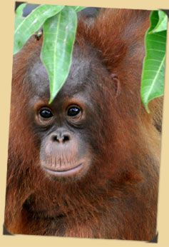 86 best images about Deforestation in Indonesia on Pinterest | Ios ...