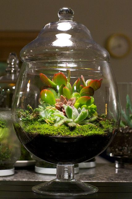 how to make a terrarium for fish