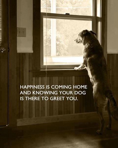Happiness Is Coming Home And Knowing Your Dog Is There To