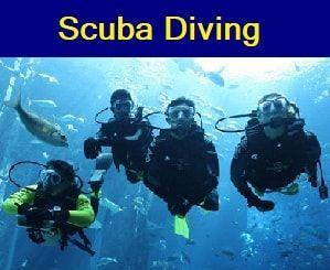 Wellington Scuba Diving, courses and adventures.  PADI courses, TDI and Dive Gear.    Your one stop dive store, Wellingtons original Premier Dive Centre!