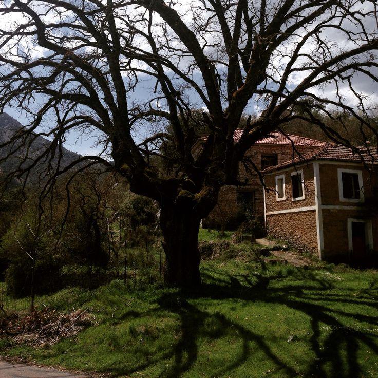 Paos Kalavrita-Peloponnesus