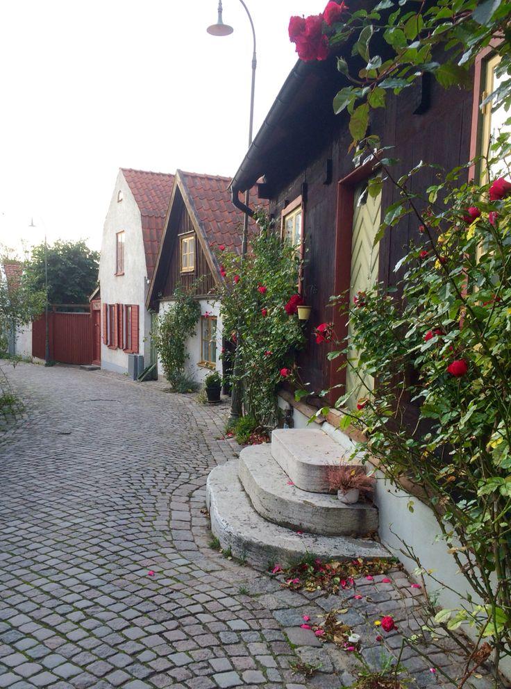 Rosor i oktober, Visby