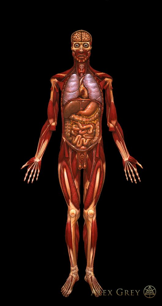 Alex Grey's Viscera: Painting, 1979, Oil on Linen, 84 x 46 in.    #art, #anatomy, #viscera