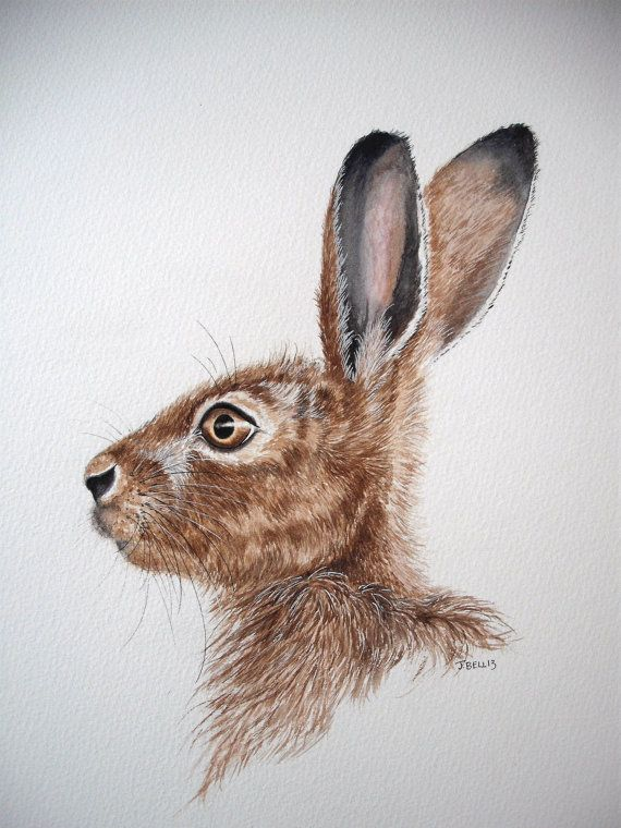 Original Watercolour Painting Of A Hare By Josephine Bell