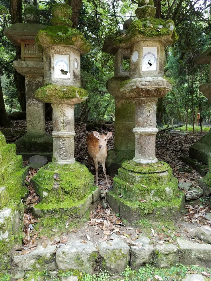 Kasuga Shrine, Nara. Where hundreds of friendly deer roam free! Japan Itinerary- 7 or 10 Days! - Have Seat Will Travel