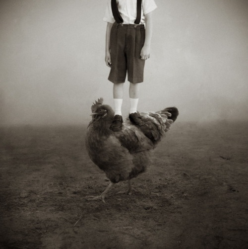 Farm boy.: Birds And Eggs, Art Limited, Farm Boys, Farms Boys, Chicken Boys, Image 94023, Birds Boys