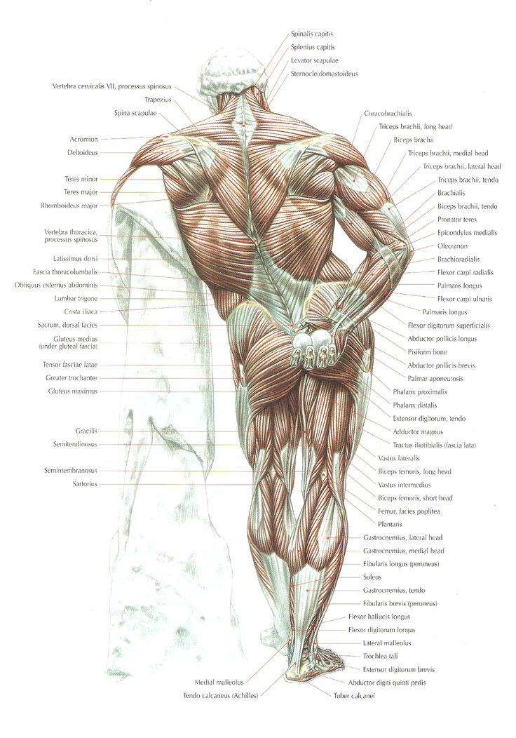 63 best images about Strength Training Anatomy on ...