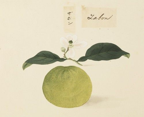"I am showing Keiga Kawahara drawing in series. Today I show you his great ""botanical art""/20 pieces. 1. ゼニアオイ Title:tree mallow 学名/Scientific name:Malva..."