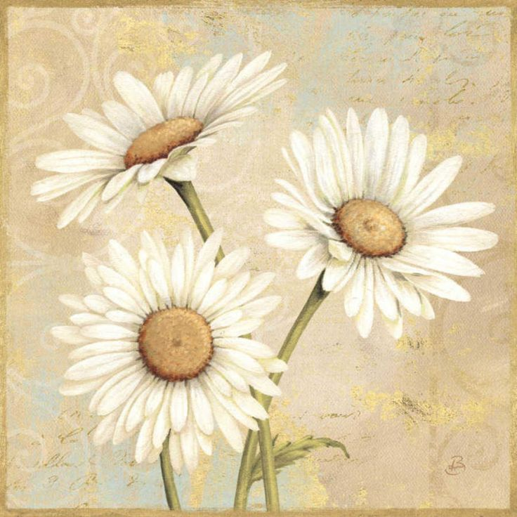 I LOVE daisies!!!!! Wild in a sunny meadow...