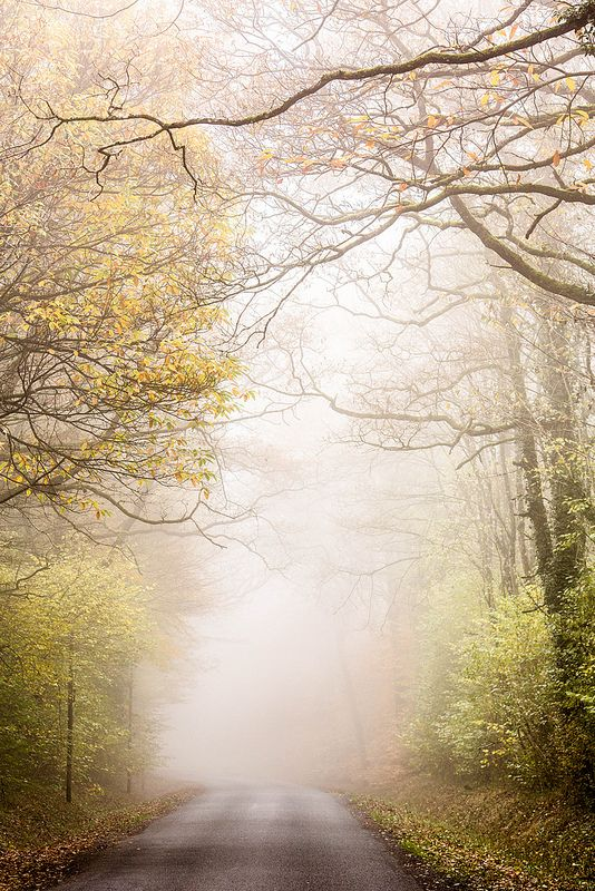 Mysterious forest between Epernay and Reims, in Champagne, France