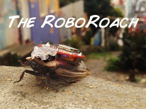 Backyard Brains: Stop Mutilating Cockroaches! | Action Alerts | Actions | PETA